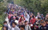 Allemagne, la police s'inquiète: «avec l'arrivée des migrants, naissance de nouveaux clans criminels»